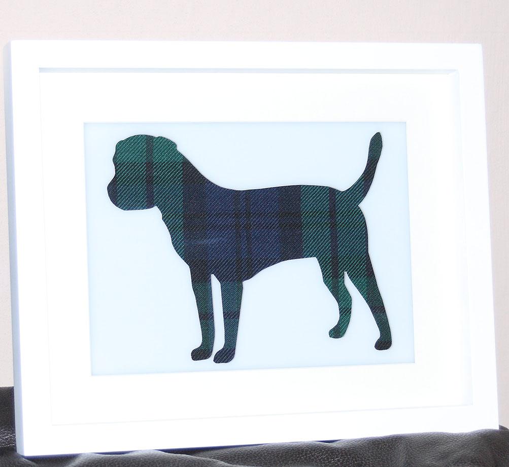 Tartan Border Terrier